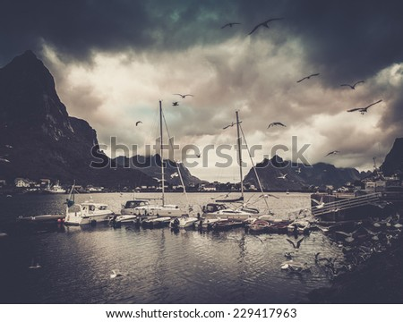 Seagulls flying over boat near moorage in Reine village, Norway - stock photo