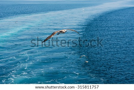 Seagulls flying over the sea with ferry trail on the sea surface - stock photo