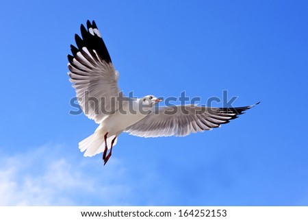 seagulls in action flying on the blue sky - stock photo