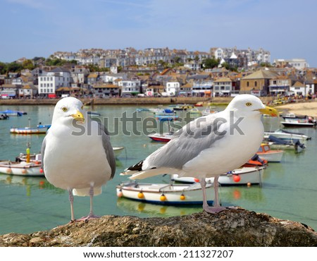 Seagulls in St Ives harbour Cornwall England UK - stock photo