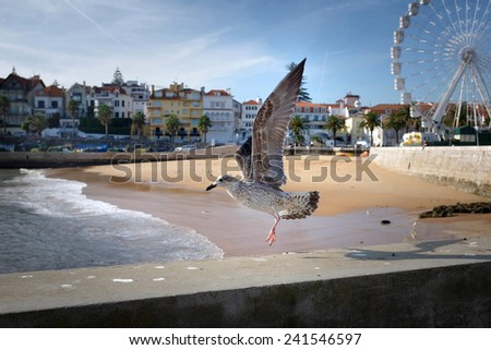 Seagulls in the beach of the beautiful village of Cascais in Portugal - stock photo