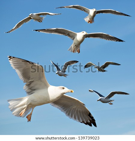 Seagulls isolated on blue sky set - stock photo