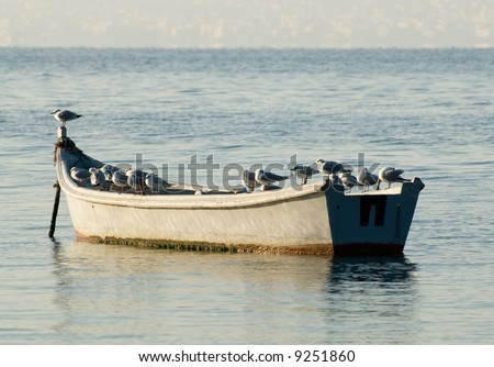 Seagulls on a boat at sunrise - stock photo