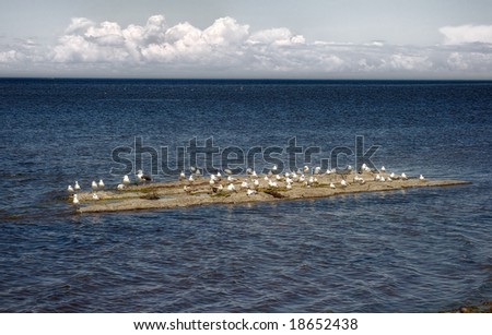 Seagulls on a rock in the St-Lawrence River - stock photo