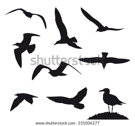 Seagulls on a white background - stock photo
