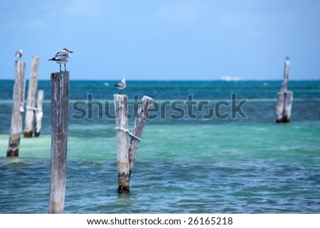 seagulls on dock against blue sea horizon in Cancun, Mexico. - stock photo