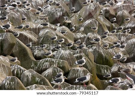 Seagulls on groyne - stock photo