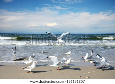 Seagulls on the beach - stock photo