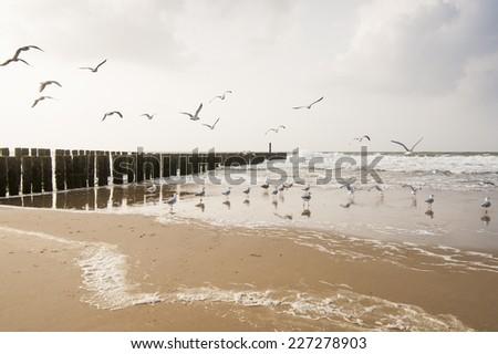 Seagulls on the beach of Domburg, Zeeland, The Netherlands - stock photo