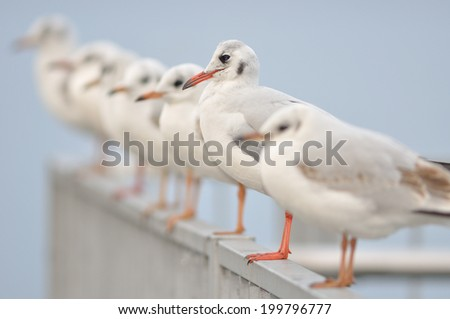 Seagulls On The Bridge - stock photo