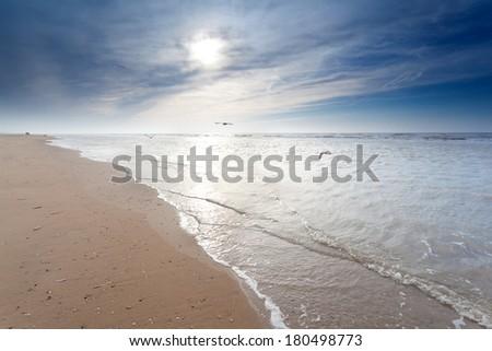 seagulls over sand beach in North sea, Zandvoort aan Zee, North Holland, Netherlands - stock photo