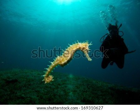 Seahorse with Diver Silhouette - stock photo