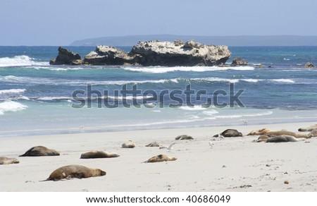 Seal Bay, Kangaroo Island, South Australia - stock photo