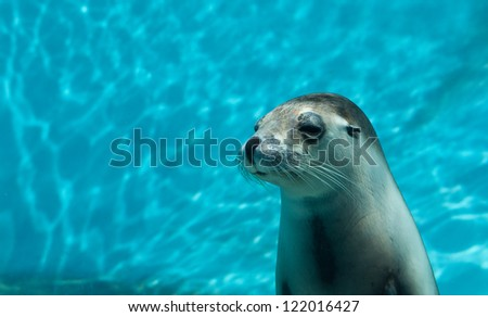 seal in a zoo - stock photo