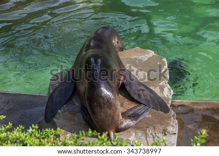 Seal on rock - stock photo