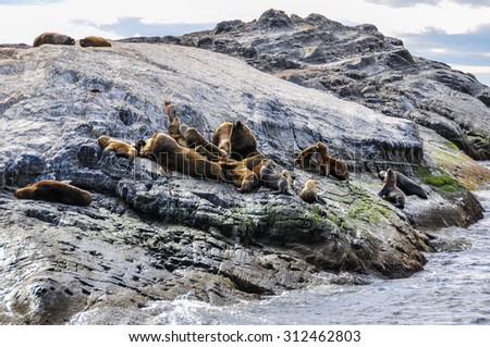 Seals resting, Beagle Channel, Ushuaia, Argentina - stock photo