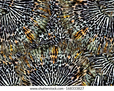 Seamless Butterfly wing Pattern  - stock photo