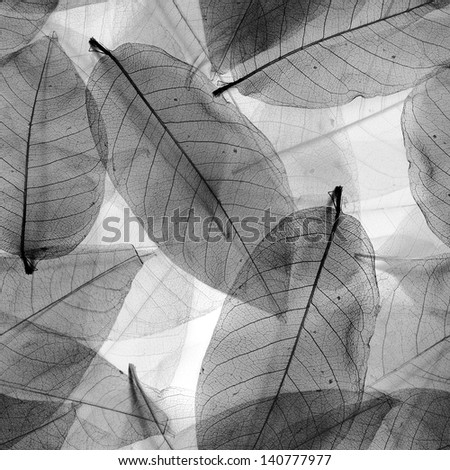 Seamless  leaves black and white background. - stock photo