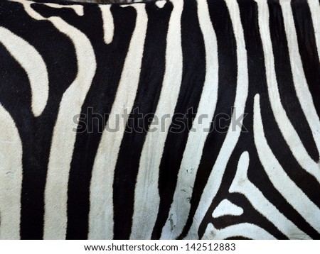 seamless zebra skin stripes pattern as texture and background with unique style - stock photo