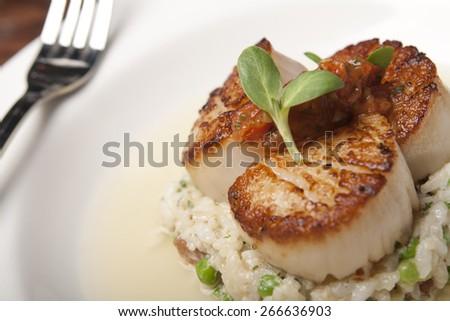 Seared scallops - stock photo