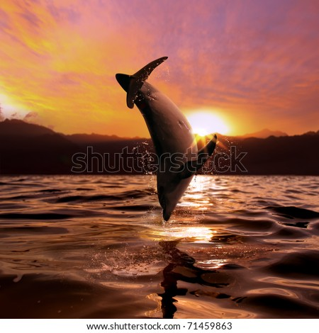 seascape beautiful playful dolphin jumped from ocean at the sunset time - stock photo