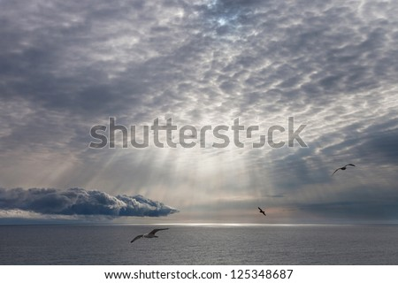 Seascape, the sun shining through the clouds and flying gulls - stock photo