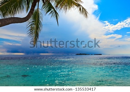 Seascape with palm tree, Maldives, The Indian Ocean - stock photo