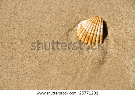 Seashell - stock photo