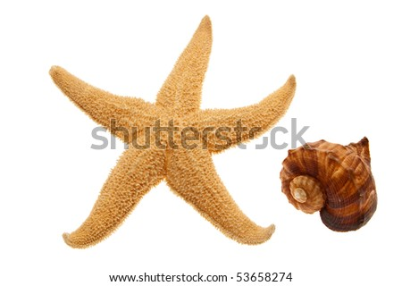 Seashell and starfish isolated on white background - stock photo