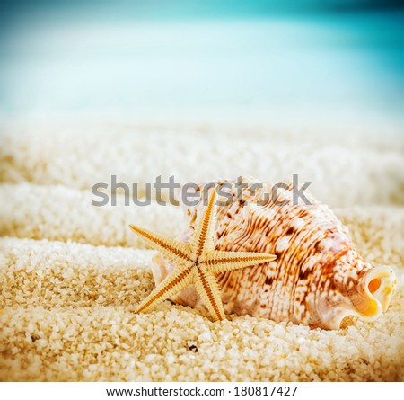 Seashell and starfish on a tropical beach lying on the golden sand on a hot summer day in square format with corner vignetting - stock photo