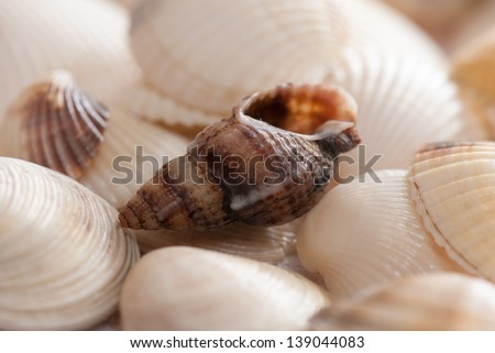 Seashell background with shallow depth of field and slight high key effect. Summer concept.  - stock photo
