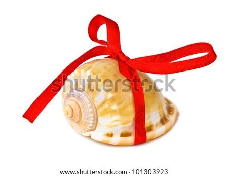 seashell for present - stock photo