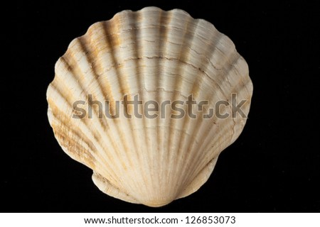Seashell from tropical beach - stock photo
