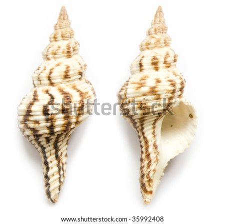 seashell front end back on the white isolated background - stock photo
