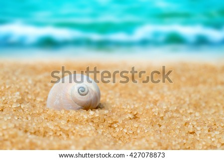 Seashell  in the sand on the background of beach and sea - stock photo