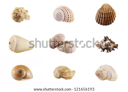 Seashell mosaic collection - stock photo