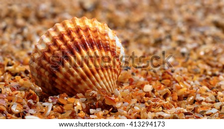 Seashell on sand at sunny nice day - stock photo