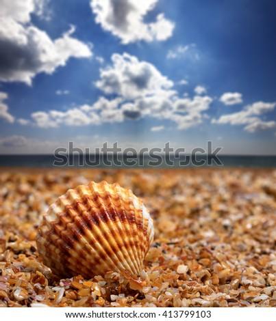 Seashell on sand at sunny summer day - stock photo