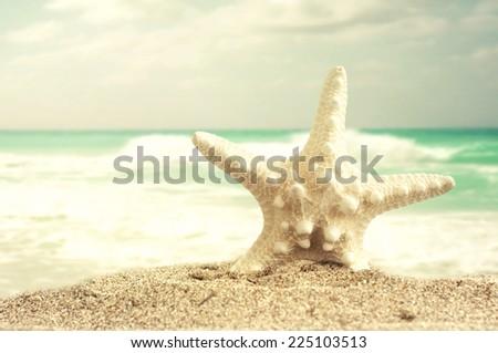 seashell on the beach - stock photo