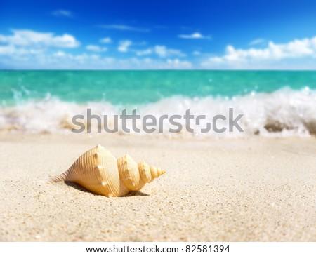 seashell on the beach (shallow DOF) - stock photo