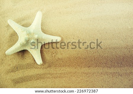Seashell on the sand. - stock photo