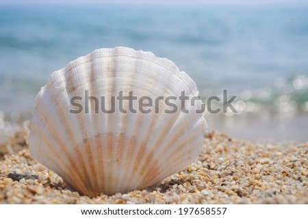Seashell on the sandy beach with blurred waves in the background - stock photo