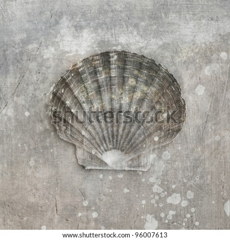 Seashell photograph, sepia toned with artistic textures. - stock photo