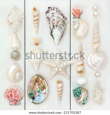 Seashell selection over wooden white background. - stock photo