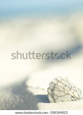 Seashell that looks out from a sea of sand on a wild beach - stock photo