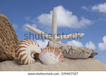 seashells and sand with a blue sky background - stock photo