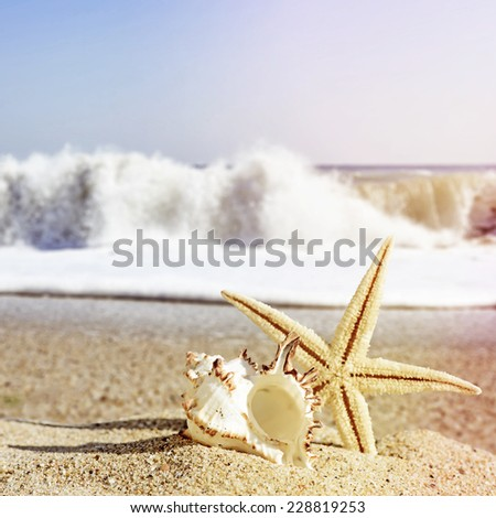 Seashells and starfish on a beach sand in retro style - stock photo