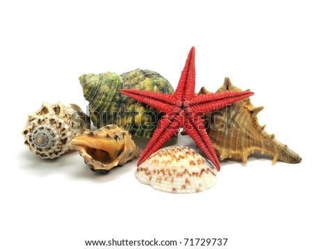 seashells and starfish on a white background - stock photo