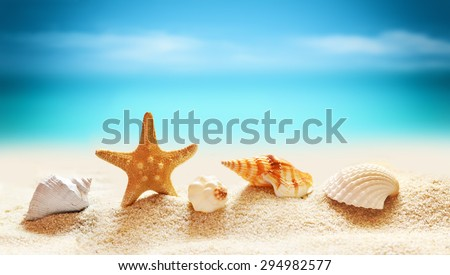 Seashells and starfish on seashore in tropical beach - summer holiday background - stock photo