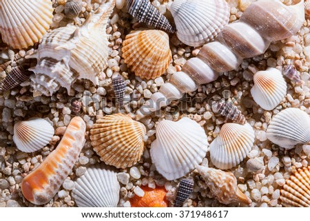 Seashells background - macro shot of beautiful seashells - stock photo